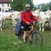 Ciclabile Drava - tratto Greifenburg Villach