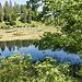 Wie bei einigen anderen Karseen auch gibt es eine schwimmende Insel aus Torf, bewachsen mit allerlei seltener Vegetation.