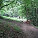 Il percorso sotto il fitto bosco