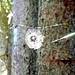 Spinnen - auch irgendwie Künstler der Natur