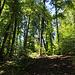 Zuerst folgte ich zu Fuss kurz einem Forstweg bevor es steil auf einem kaum sichtbaren Pfad direkt zur Ruine Hertenberg hinauf ging.