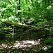 Ein steiles, verschlungenes Weglein leitete hinauf zur Burgruine Strenger Felsen .