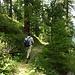 schöner Lärchenwald