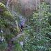 Der Hutzenauersteig führt durch eine geniale Routenführung durch zahlreiche Steilrinnen und über Rippen hinweg