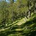 Il sentiero si inoltra nel Bosco del Lambro
