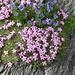 Blumen soweit das Auge reicht