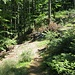 Irgendwo hier rechts des Weges müsste der Hirschfelsen liegen. Auf der Suche ging ich nach rechts auf dem stillgelegten Forstweg und dann weiter weglos durchs Gelände hinauf.