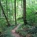 So ging ich dann ohne Hirschfelsen weiter auf dem schmalen Pfad, der bald darauf auf einem breiten Forstweg mündet.