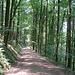 Weiter hinunter nach Haslach folgte ich breiten und etwas langweiligen Forstwegen.