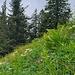 Schöne Wiesen unter dem Brunnenkopf