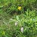 Orchideen gleich zu Beginn