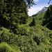 Nach steilen 250 Meter Aufstieg durch dichten Bergwald erreichte ich im Fleschtal den Waldrand unterhalb der Alp Chällerli in wunderschönen Fleschtal.