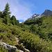 Spätestens bei Lärchenstafel überwuchert die Natur den nicht mehr unterhaltenen Bergwanderweg. Das obere Fleschtal ist ein wunderschöner Ort in freier Natur wohin sich kaum Wanderer verirren.