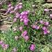 Ma anche la flora spontanea è bella