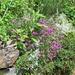 Ancora bei fiori
