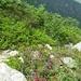 ...che riporta all'Alpe Fornà  superiore
