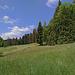 Weideland im Schwändeli, südlich von Mühleseilen (1004 m). (17.05.2020)
