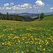 Von der vorderen Hofgruppe Aebersold (1107 m) schweift der Blick über den Wildeneygraben zur Blasenflue (1118 m), die den Kulminationspunkt eines eigenen, dem Napfgebiet ähnlichen, radialen Bergmassivs bildet. (10.05.2020)