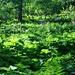 üppiges Grün im Aufstieg