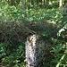 ... mitten im Wald.