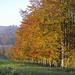 Lodernder Herbst