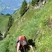 ein guter Pfad im steilen Gelände leitet unter die Brisisüdwand, ab und an ist Handeinsatz gefragt.