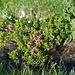 Blumenreicher Heido