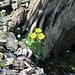 Blumen im Bergsommer I