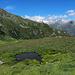 Verkrautete Alp Obermatte