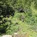 Es folgt ein steiler Abstieg, bevor es zum Riedmattstock hinauf geht.
