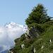 Weisshorn 4506m vom Wurzenbord 2214m