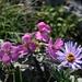 ... und vorbei an prächtigsten Blumen I