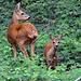 ...ihr Bambi ♥