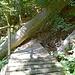 Unpassierbarer Weg zwischen Schlössli und Stäubi. Etwas weiter oben im Hang gibt es eine Umgehungsmöglichkeit.