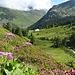 Kurz vorbei an Alp digl Chants haben wir den Ava da Plazbi überquert.
