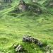 nasse Wiesen beim Aufstieg zum Ruosalper Chlum