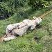 Wenige Meter weiter vorne ein Schaf, welches sich in einem Zaun, aufgestellt vom Mensch, verheddert hat und elendlich zu Grunde gegangen ist. MENSCH - was machst Du nur mit der Flora und Fauna auf dieser Welt???