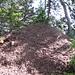 ...welcher von diesen fleissigen Ameisen um mindesten einen halben Meter erhöht wurde.