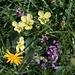 typische Blumen-Symphonie auf dem grasigen Gratabschnitt