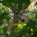 Deer in Woods on Trail