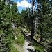 die letzten Meter durch hübschen Föhrenwald...