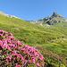 Am Anfang der Aufstieg in Pascul da la Pischa.