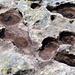 Löchriger Hohgantsandstein auf der Steinigen Matte