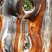 Der wohl bekanntesten Überresten eines Baumes in Graubünden, auch bekannt als Benutzerbild von [u CampoTencia].
