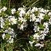 ... erfreut uns dieses adrette Blumengrüppchen