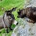 Hallo! Was bist du denn für ein Esel. ;-)