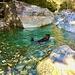 Artus schwimmt in der Bavona.