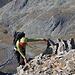 Arête d'Annibal:<br /><br />Ivette auf dem wunderschönen Grat oberhalb 3500m hoch überm italienischen Vallon de Moline.