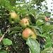 Äpfel auf 1000 m hätte ich nicht erwartet