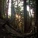 Weglos durch den Steilwald...